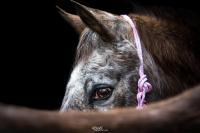 Pension poney aux écuries d'Altesse écurie de propriètaire à Ailly dans l'Eure