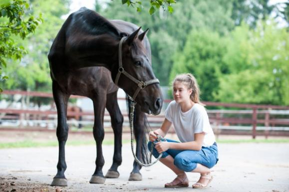 Pensions pour chevaux et poneys, Louviers (27)