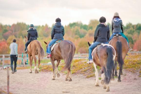 Cours d'équitation près d'Acquigny (27)